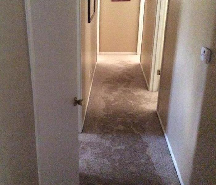 Hallway With Black Mold Under Carpet Before