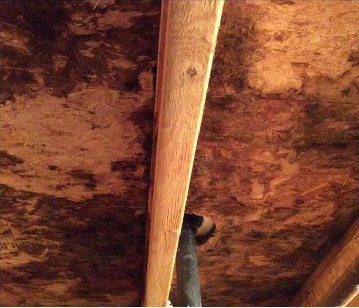 Mold on crawlspace