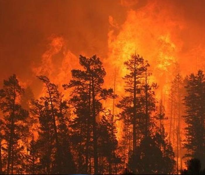 Fire Damage High Risk for Wildfires Across Arizona