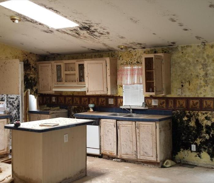 Mold Remediation Water Damage Cleanup